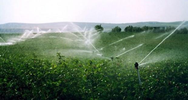 Las sondas de humedad ahorran hasta un 40% del agua de riego