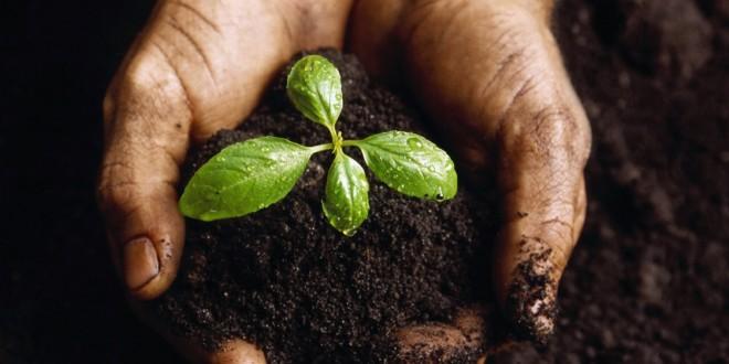 Fertilizantes minerales, esenciales para una agricultura sostenible