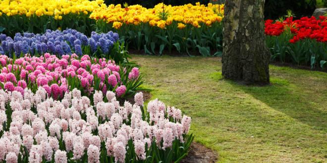 En primavera, vuelven las flores.