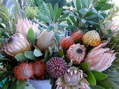 La Isla lleva 15 años exportando proteas y el cultivo va en expansión