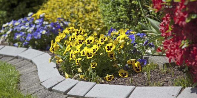 Gran logro de las empresas canarias de jardinería en tenerife