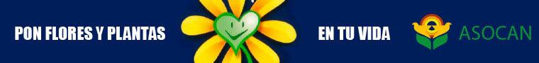 Pon Flores y Plantas de Tenerife en tu vida