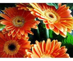 Aumenta la exportación de flor y planta viva