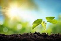 Las plantas se adaptan mejor de lo esperado al cambio climático