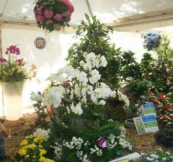Flores y plantas ornamentales en las Fiestas de Mayo santacruceras