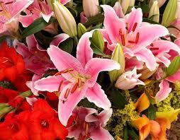 Las flores canarias se distinguen por su lozanía y duración