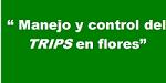 """CHARLA """"CONTROL Y MANEJO DE LOS TRIPS DE LAS FLORES"""""""