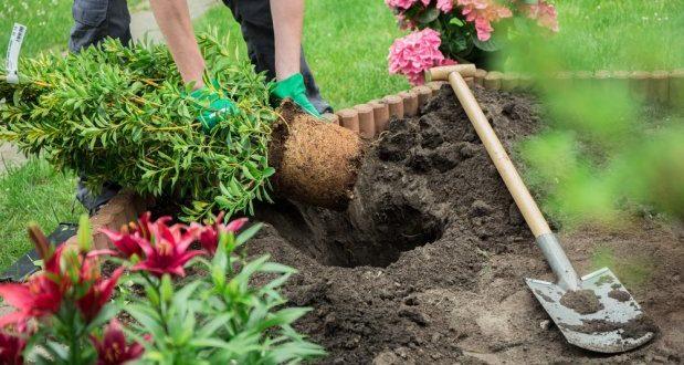 Plantas y flores, cómo cuidarlas para que duren más