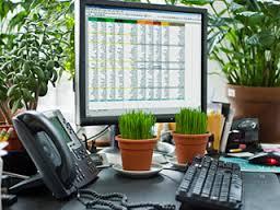 Estos son los beneficios de poner una planta en tu escritorio