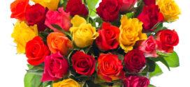 Significado de las flores en San Valentín