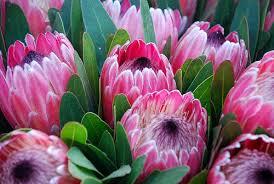 La tímida primavera de la floricultura