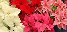 Calendario del Jardín en diciembre