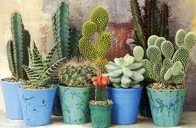 Cinco plantas de poco riego