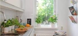 Plantas: claves para integrarlas en la decoración de tu casa