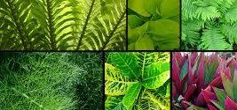 """Floramedia presenta el webinar """"Claves para etiquetar tus plantas"""" el jueves 21 de junio"""