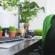 Beneficios de tener una planta en el escritorio de tu oficina