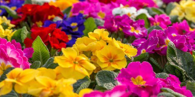 La exportación de flores y plantas vivas crece
