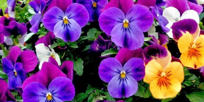 Jardín en mayo