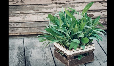 10 plantas que irradiarán energía positiva en tu casa