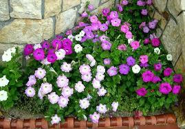 Seis plantas perfectas para dar color en tu casa en el otoño e invierno