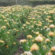 Cabildo y ASOCAN apuestan por las proteas como cultivo alternativo