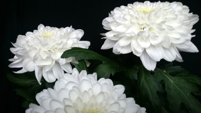 El sector floral concentra en esta campaña el 20% de su volumen de negocio