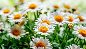 Plantas perfectas para cultivar en primavera