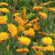 Las organizaciones europeas del sector de las flores y plantas vivas se unen por primera vez para pedir ayudas a la CE