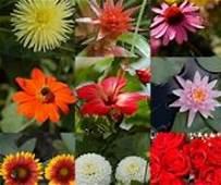 Semana Santa sin flores: productores y centros de jardinería urgen la reanudación de las ventas como en países de la UE