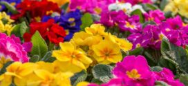 Productores de planta ornamental y flor reiteran al ministro la necesidad de ayudas urgente al sector