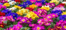 FEPEX solicita al Gobierno el reconocimiento de las flores y plantas como productos de primera necesidad