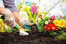 La biofilia o cómo mejorar nuestro bienestar en la oficina y casa gracias a las plantas