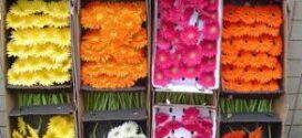 La exportación de flor cortada española crece un 49% en el último lustro y mantiene la evolución positiva en 2021