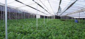 Bruselas da luz verde a los 120 millones de euros en ayudas para la renovación de invernaderos españoles