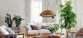 Plantas que te ayudan a  mejorar la calidad del aire de tu hogar